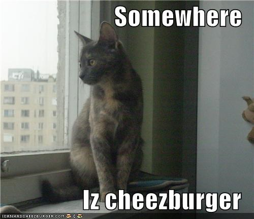Somewhere  Iz cheezburger
