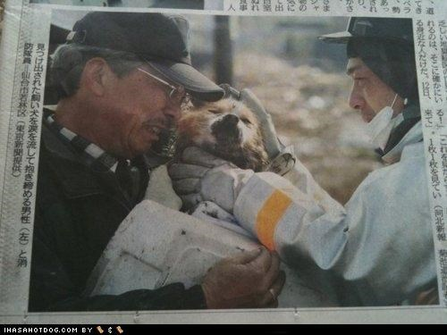Goggie Reunited With Owner After Quake in Japan