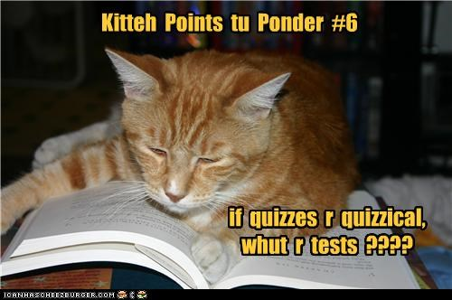 caption,captioned,cat,consideration,points,ponder,pondering,question,quizzes,quizzical,suffix,tabby,tests,what