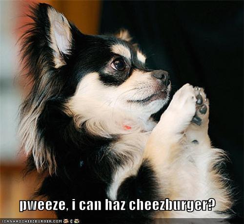 pweeze, i can haz cheezburger?