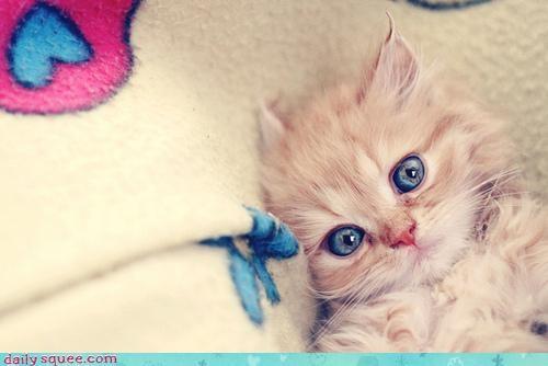 awake,baby,big,cant,cat,eyes,insomnia,insomniac,kitten,sleep,wide eyed