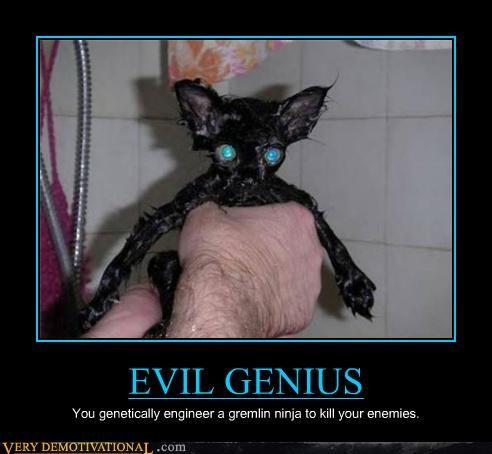animal,dogs,evil genius,wtf