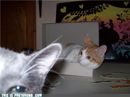 Cats,Caturday,cute,photobomb
