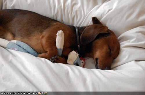 asleep,cuddling,cyoot puppeh ob teh day,dachshund,puppy,sleeping,snuggling,stuffed animal,toy