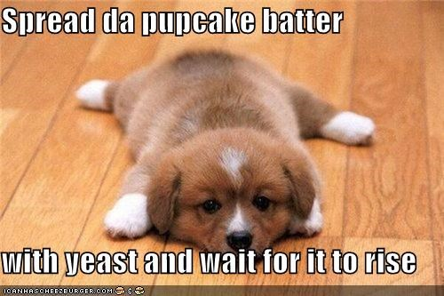 Spread da pupcake batter  with yeast and wait for it to rise