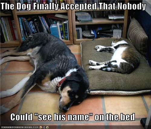 "The Dog Finally Accepted That Nobody  Could ""see his name"" on the bed"