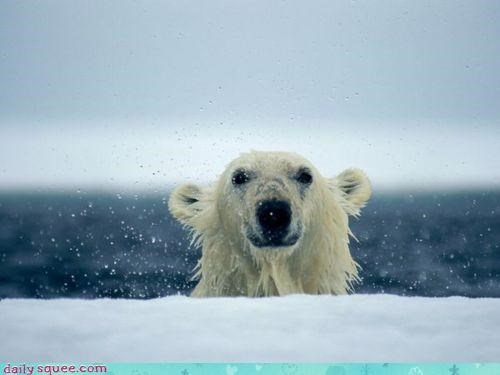 acting like animals,arctic,bear,booth,cold,dunking,dunking booth,polar bear,water,wet