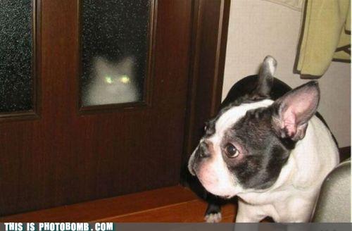 Caturday,creepy,lazer eyes,lurker,photobomb