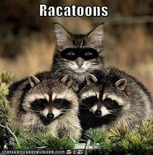 Racatoons