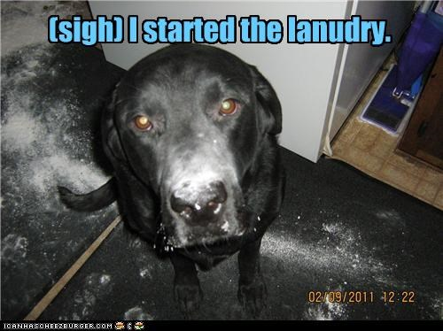 do not want,labrador,laundry,mess,sigh,soap,started,upset