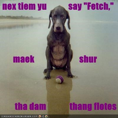 advice,angry,ball,do not want,fetch,fetching,floats,make sure,next time,unhappy,upset,wet,whatbreed