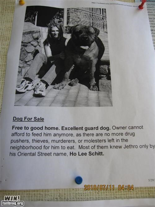 Ad,animals,clever,dogs,swearing