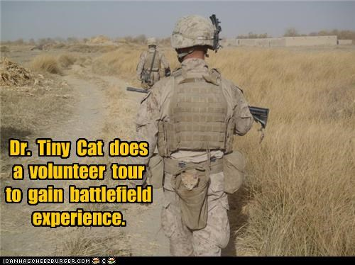 Dr.  Tiny  Cat  does  a  volunteer  tour  to  gain  battlefield experience.