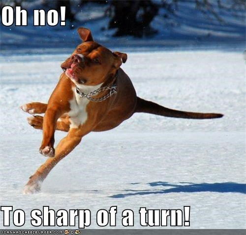 accident,afraid,boxer,miscalculation,oh no,problem,running,sharp,snow,too,turn,turning