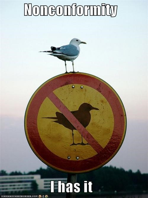 "Nonconformist seagull sitting on top of a ""no seagulls"" sign"