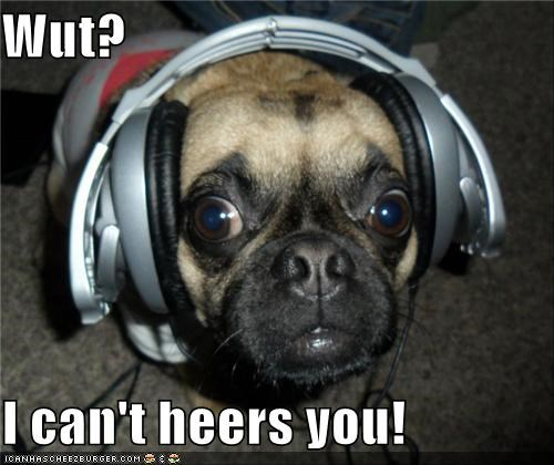 cant,confused,headphones,hear,pug,question,what