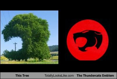 This Tree Totally Looks Like The Thundercats Emblem