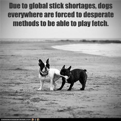 Due to global stick shortages, dogs everywhere are forced to desperate methods to be able to play fetch.