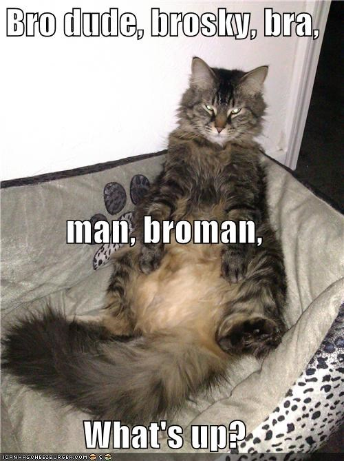 Bro dude, brosky, bra,  man, broman, What's up?
