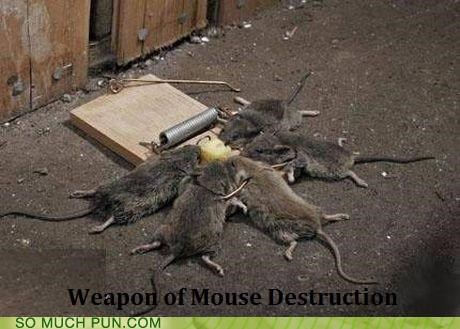 acronym,destruction,literalism,Mass,mice,mouse,mouse trap,similar sounding,weapons,wmd,wmds