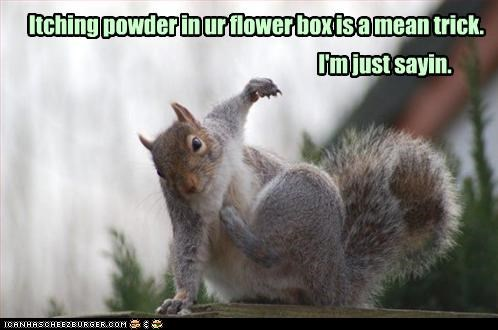 Itching powder in ur flower box is a mean trick. I'm just sayin.