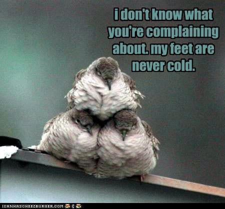 bird,birds,caption,captioned,cold,complaining,dont-know,dont-understand,feet,never,perching,personally
