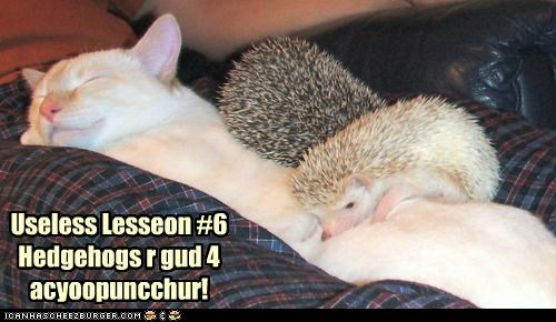 acupuncture,caption,captioned,cat,good,hedgehog,hedgehogs,lesson,purpose,six,sleeping,useless