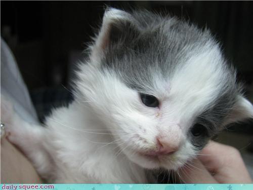 beautiful,beauty queen,closeup,hard work,kitten,model,modeling,reader squees,sleepy,three weeks old