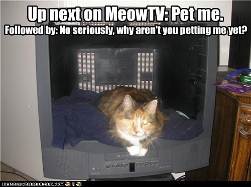 Up next on MeowTV: Pet me.
