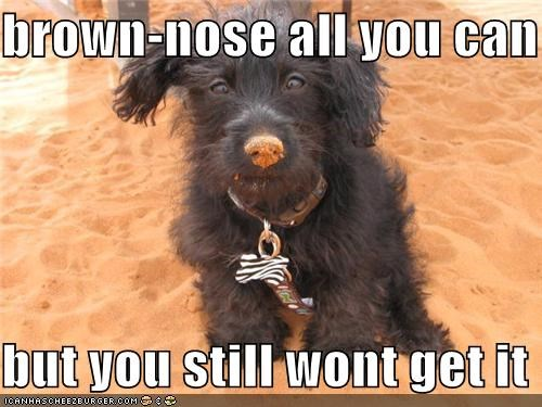 brown-nose all you can  but you still wont get it