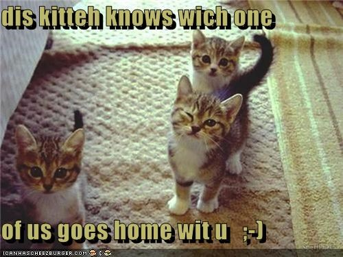 dis kitteh knows wich one  of us goes home wit u   ;-)