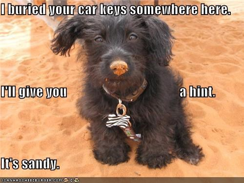 I buried your car keys somewhere here. I'll give you                                          a hint. It's sandy.