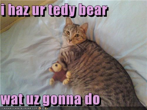 i haz ur tedy bear  wat uz gonna do