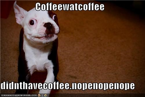 boston terrier,caffeine,coffee,denial,excited,hyper,lying,what