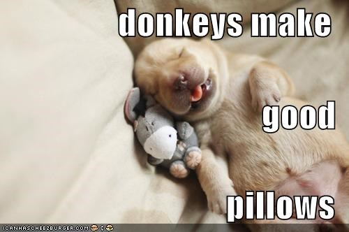 donkeys make good  pillows