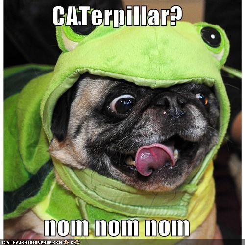 best of the week,cat,caterpillar,costume,frog,Hall of Fame,i has a hotdog,nom,prefix,pug,pun