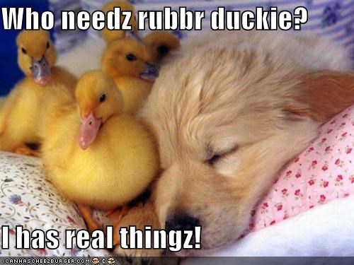 Who needz rubbr duckie?  I has real thingz!
