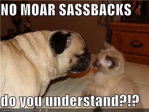 cat,kitten,lecture,more,no,no more,pug,question,sassbacks,sassing,talking back,understand