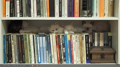 books,cyoot kitteh of teh day,library,lots of cats,shelves