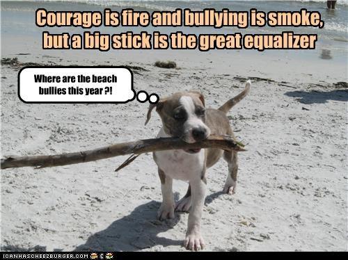 adage,advice,beach,bullies,pit bull,pitbull,puppy,saying,stick