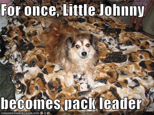 For once, Little Johnny  becomes pack leader
