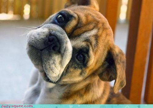 Cannot... Resist... Puppy... Eyes...