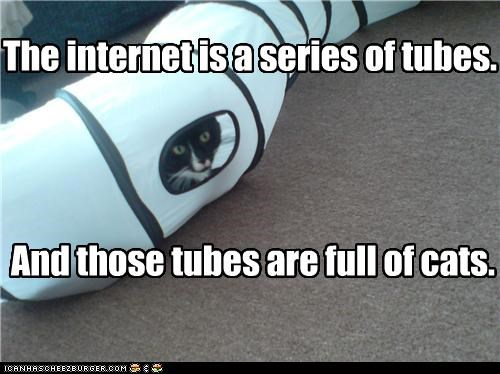caption,captioned,cat,Cats,explanation,full,Hall of Fame,internet,series,tubes