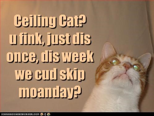 asking,caption,captioned,cat,ceiling cat,monday,prayer,praying,question,skip,tabby