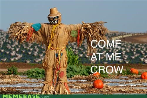 come at me bro,crow,field,Memes,punikins,scarecrow