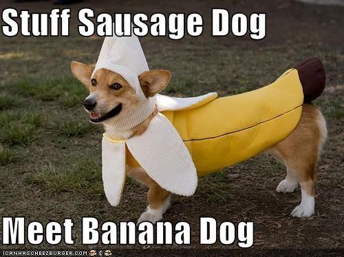 Stuff Sausage Dog  Meet Banana Dog
