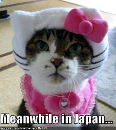 Hello, Hello Kitty... kitty.