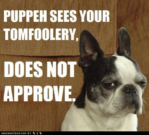 approve,disapprove,does not,evil eye,french bulldogs,sees,tomfoolery