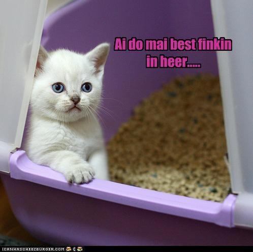 best,caption,captioned,cat,explanation,here,kitten,litter box,location,reason,thinking