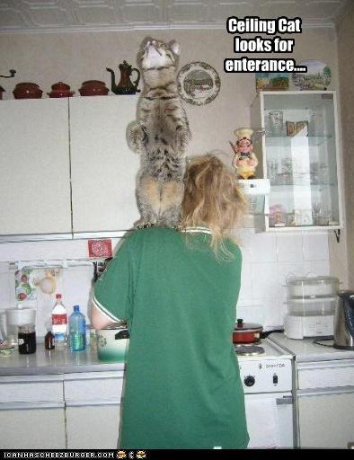 Ceiling Cat looks for  enterance....